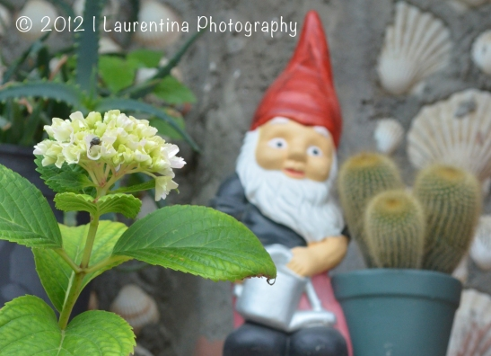 gnome, macro, cactus, flowers, stone wall, vernazza, cinque terre, italy