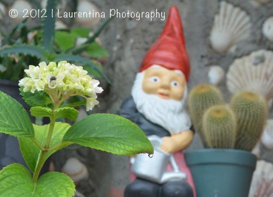 gnome, macro, cactus, flowers, stone wall, vernazza, cinque terre, italy